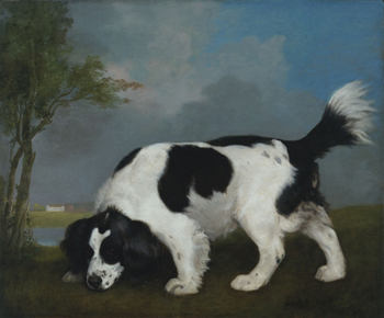 Black and White Spaniel Following a Scent, 1793