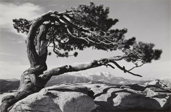 Exhibition:  Natural Abstraction: Brett Weston and His Contemporaries